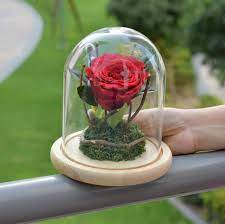 Show Your Love Or Celebrate Your Birthday With the Rose and Glass Dome Set